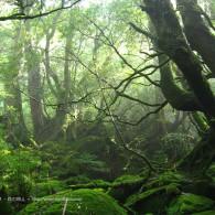 早朝の森を歩いてみる